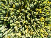 Aerial View Of A Green Forest. Beautiful Landscape. Clouds Over The Green Forest. Aerial Birds Eye  poster