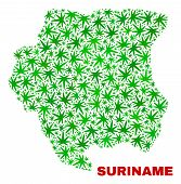 Vector Marijuana Suriname Map Collage. Template With Green Weed Leaves For Weed Legalize Campaign. V poster