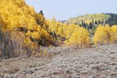 stock photo of sagebrush  - Unita mountains in Utah during autumn with yellow aspen trees and sagebrush - JPG