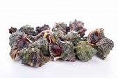 stock photo of whelk  - isolated whelk - JPG
