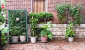 stock photo of movable  - Vegetable container gardening with tomatoes - JPG