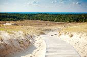 picture of dune grass  - nature reserve with dried grass and sand dunes in Curonian Spit Lithuania - JPG