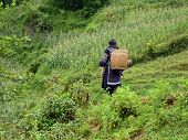 stock photo of hmong  - Hmong woman in moutains of Sapa - JPG
