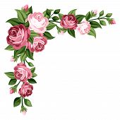 stock photo of bud  - Vector corner with vintage pink roses - JPG