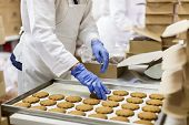 stock photo of cookie  - Factory worker packing cookies in a cookies factory - JPG