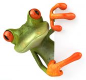 stock photo of amazonian frog  - Fun green frog - JPG