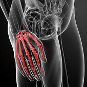 stock photo of skeletal  - 3d renders illustration skeletal hand  - JPG