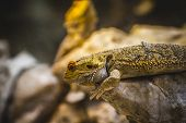 picture of lizard skin  - scaly lizard skin resting in the sun - JPG