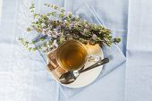 image of infusion  - Mentha pulegium infusion and items to prepare it - JPG