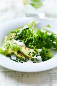 stock photo of endive  - Avocado and Endive Salad with Yogurt Dressing - JPG