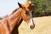 foto of cowboys  - cute horse wearing a cowboy hat - JPG