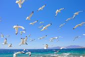 foto of swarm  - swarm of sea gulls flying close to the beach of mykonos islandGreece - JPG