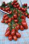 pic of plum tomato  - Cherry tomato  - JPG