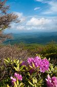 picture of blue ridge mountains  - Beautiful view of the Blue Ridge Mountains from the Blue Ridge parkway with Catawba Rhododendron in bloom - JPG