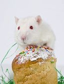 pic of rats  - Cute little decorative rat near the Easter cake - JPG