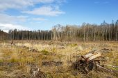 stock photo of deforestation  - meadow with stumps after deforestation hack woods - JPG