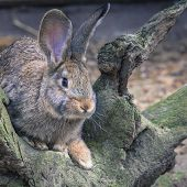 picture of wild-rabbit  - Wild rabbit on the nature in Poland - JPG