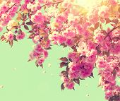 picture of sun flare  - Spring blossom background - JPG