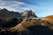 picture of lavender plant  - Mountains and volcanic lava sand dunes by the sea in Stokksness - JPG