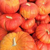 Cinderella Pumpkins Variety poster
