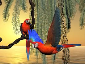 stock photo of green-winged macaw  - The Red and Green Macaw is an endangered species of parrot and is found in South America - JPG