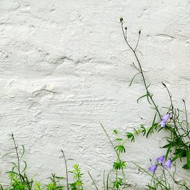 image of blue-bell  - Blue bells and green grass on textured whitewashed wall of a building - JPG