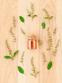 image of basil leaves  - Bottle of essential oil with holy basil leaf and flower on wooden background - JPG