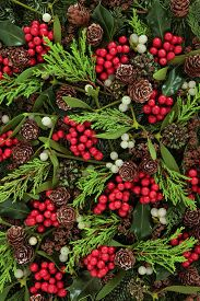 picture of greenery  - Winter and christmas abstract background with holly - JPG