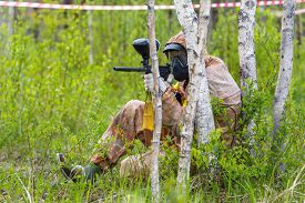picture of paintball  - Paintball ambush in birch trees in summer - JPG