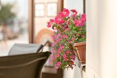 Red Plant On Windowsill Outdoor In Cafe. Traditional European Coffeehouse With Green Plants. Decorat poster