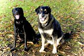 image of dog park  - two dogs - JPG