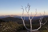 stock photo of anza  - Dead tree at Anza - JPG