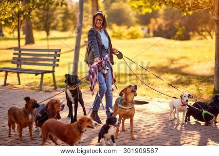 poster of Professional Dog Walker - Happy group of dogs with woman dog walker enjoying in walk outdoors.