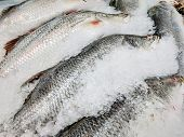 Fresh Sea Bass Fish On Ice Sale In Market. Sea Food In Supermarket. Food Industrial. poster