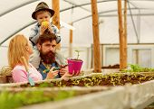 Summer Cultivation. Cultivation Ground In Summer. Family Do Cultivation In Summer Greenhouse. Summer poster
