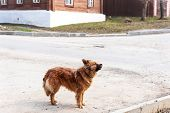 Dog Playing Outside Smiles.curious Dog Looking At The Camera.young Mix Breed Dog Outdoors In Street. poster