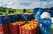 Orange Harvest Time poster
