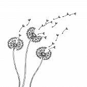 Dandelion Silhouettes. Dandelions Grass Pollen Delicate Plant Seeds Blowing Wind Fluff Flower Abstra poster