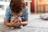 Cute European Child Plays With Shorthair Kitten poster
