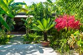 Small Palm And Red Flowering Tree In Tropical Garden On Sunny Day poster