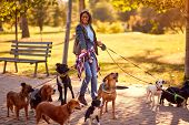 Professional Dog Walker - Happy group of dogs with woman dog walker enjoying in walk outdoors.