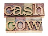 stock photo of cash cow  - cash cow  - JPG