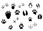 stock photo of hoof prints  - Animal footprints and tracks isolated on white for wildlife concept design - JPG