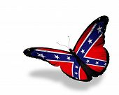 stock photo of confederate flag  - Confederate Rebel flag butterfly flying isolated on white background - JPG