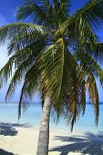 foto of dhoni  - Tropical beach on Maldives in the Indian Ocean - JPG