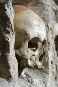 stock photo of exhumed  - skull from skull - JPG