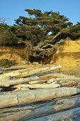 pic of levitation  - Levitating Beach Tree  - JPG