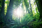 picture of olympic mountains  - Summer in Rainforest  - JPG