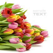 image of floral bouquet  - bouquet of the fresh tulips on white background  - JPG