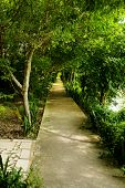 foto of tree lined street  - Street with green trees in the park - JPG